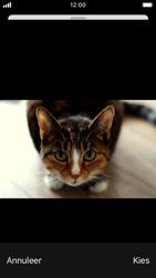 Apple iPhone SE - iOS 13 - E-mail - Bericht met attachment versturen - Stap 14