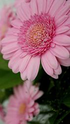 HTC Desire 816 - Photos, vidéos, musique - Prendre une photo - Étape 15