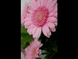BlackBerry 9320 - Photos, vidéos, musique - Prendre une photo - Étape 11