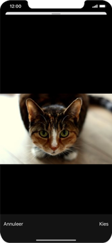 Apple iPhone XR - iOS 13 - E-mail - Bericht met attachment versturen - Stap 14
