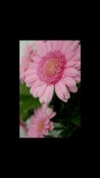 HTC Desire 626 - Photos, vidéos, musique - Prendre une photo - Étape 16
