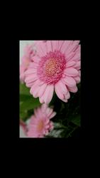 HTC Desire 820 - Photos, vidéos, musique - Prendre une photo - Étape 18