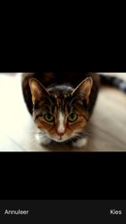 Apple iPhone 7 - iOS 12 - MMS - Afbeeldingen verzenden - Stap 11