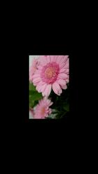 HTC One M9 - Photos, vidéos, musique - Prendre une photo - Étape 17
