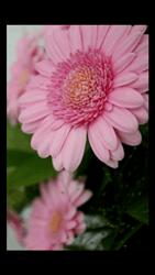 HTC Desire 510 - Photos, vidéos, musique - Prendre une photo - Étape 13