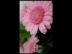 BlackBerry 9720 - Photos, vidéos, musique - Prendre une photo - Étape 11