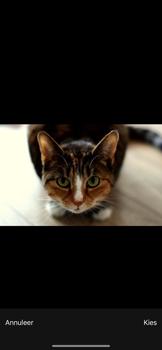 Apple iPhone 11 - MMS - afbeeldingen verzenden - Stap 13