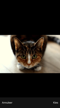 Apple iPhone 6 Plus iOS 9 - MMS - Afbeeldingen verzenden - Stap 11