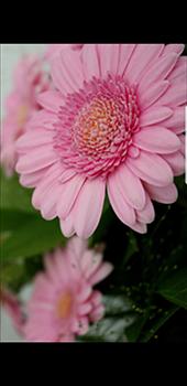Samsung Galaxy Note 9 - Photos, vidéos, musique - Prendre une photo - Étape 17