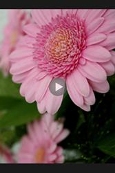 Alcatel Pixi 3 Dual Sim - Photos, vidéos, musique - Créer une vidéo - Étape 10