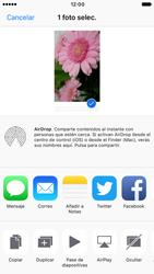 Apple iPhone 6 iOS 10 - Funciones básicas - Uso de la camára - Paso 10