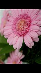 HTC U Play - Photos, vidéos, musique - Prendre une photo - Étape 15
